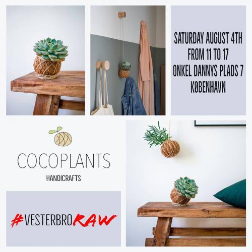 coco plants